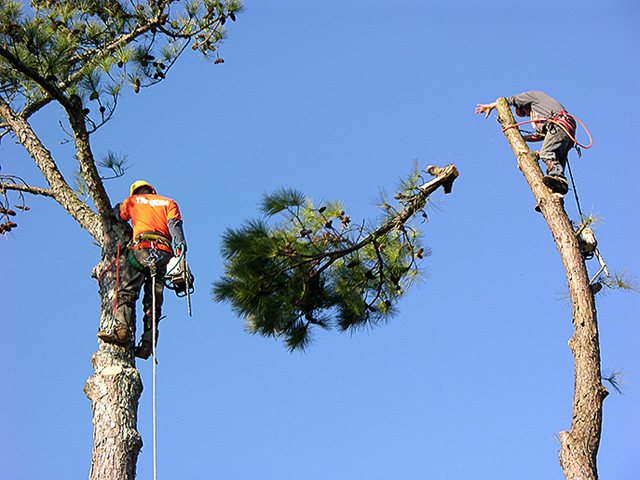 Tree Service Mansfield Texas Tree Trimming Tree